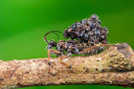 assassin bug 8