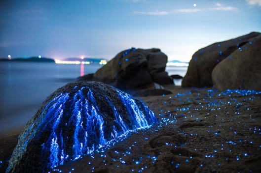 Tbud_photo_sea_fireflies7