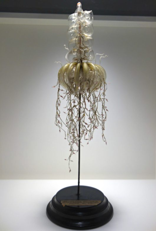 'Physophora hydrostatica [magnifica]' (a sea jelly) by Leopold and Rudolf Blaschka