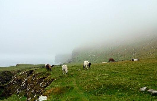 miniature-ponies-foula-island-1