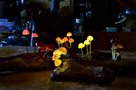 12yukiotakanomushroomlights