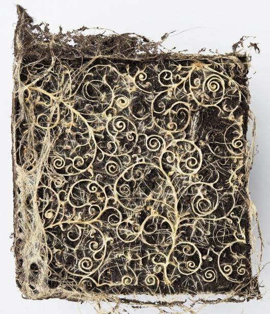 plant-root-art-2