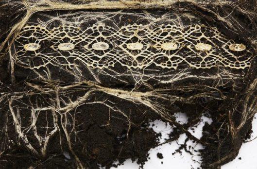 plant-root-art-4-644x424
