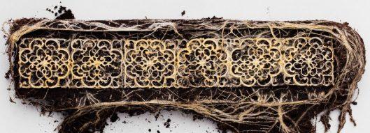 plant-root-art-960x347
